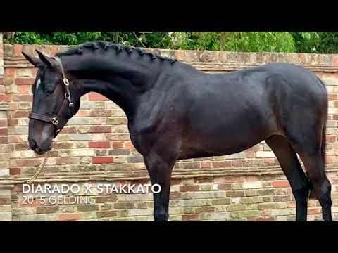 **For sale ** Diarado x Stakkatol ( STAKKATO) 2015 gelding
