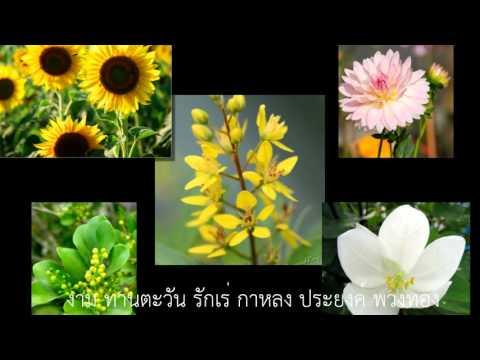 อุทยานดอกไม้ (อรวี สัจจานนท์) .flv