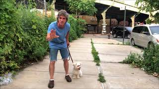 Why you Don't tell dog Stay,  How to proof Sit is implied stay with Coton de Tulear