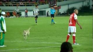 Dog interrupts South America Cup soccer game for over 3 minutes