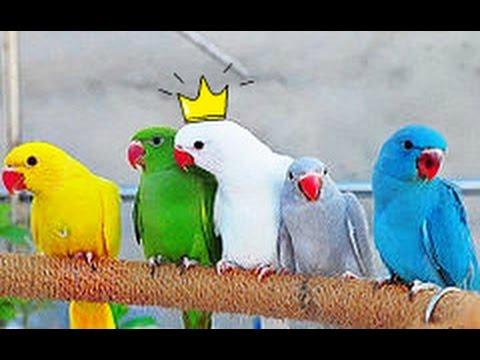 Объявления о продаже попугаев неразлучников в донецке по доступным ценам. Птенцы, самки и самцы попугайчиков от зоомагазинов, питомников и.