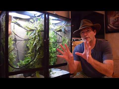 Steven Wrangler Chameleon Adventures