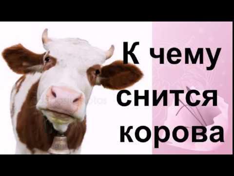 К чему снится корова Сонник от Ирины
