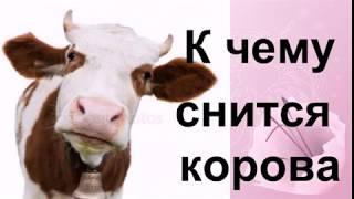 Сон, в котором корова снится очень упитанная, с жирными боками, большая – очень хороший, как нетрудно догадаться.