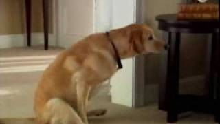 Dog Wiping His Butt