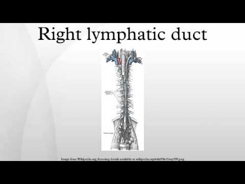 Right Lymphatic Duct Youtube