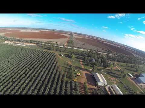 Olive Grove, Hillston NSW