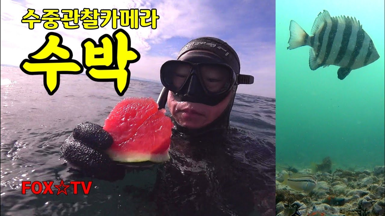 수박을좋아하는고기는? 수박수중관찰카메라/Underwater watermelon-FOX☆TV