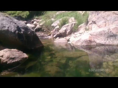 Fishes in small streams of Kuthiala Abbottabad