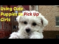 Using Cute Puppies To Pick Up Girls