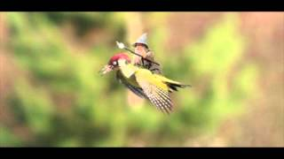 Weasel Rides Woodpecker Bird - Best Memes - Gandalf Rides Woodpecker