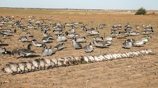 """THOUSANDS of Pintails! Death From Below: EP7 """"Field Duck Dreams"""""""