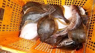 Рыбалка Камбала Сахалин