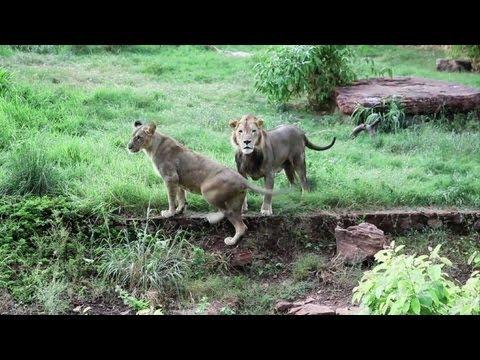 Bamako zoo reopens doors to the public