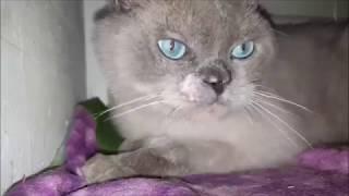 А потом возникла кошка – львица, но в миниатюре.