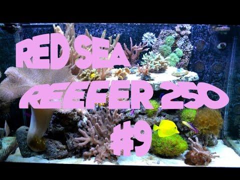 AQUARIUM récifal red sea reefer 250#9