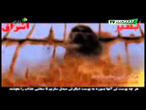 Видео с наказанием женщин