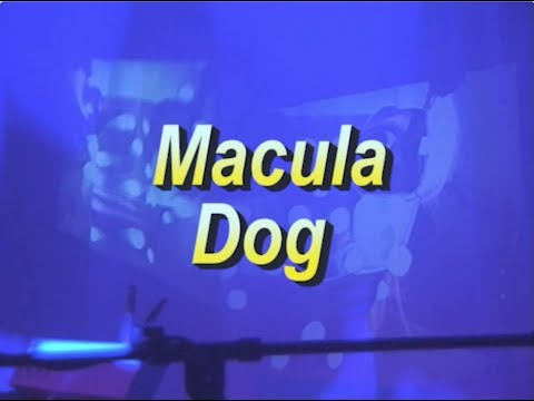 Macula Dog Live at Red Light Far Rockaway