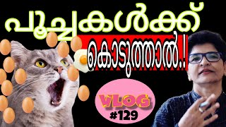 Can Cats Eat Eggs? | Cats Health And Nutrition | Cat Feeding Tips | Nandas Pets&Us | Vanaja Subash