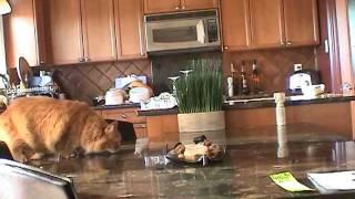 Owners take Revenge on Cat!