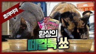 [자동&호야미야] 환상의 떼껄룩 쑈 / 고양이 간식 3종 세트 / 빙빙 낚시대 장난감