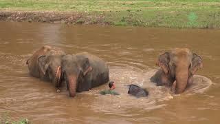 Amazing elephant friendship with human