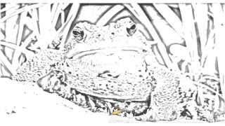 Auto Draw 2: American Toad