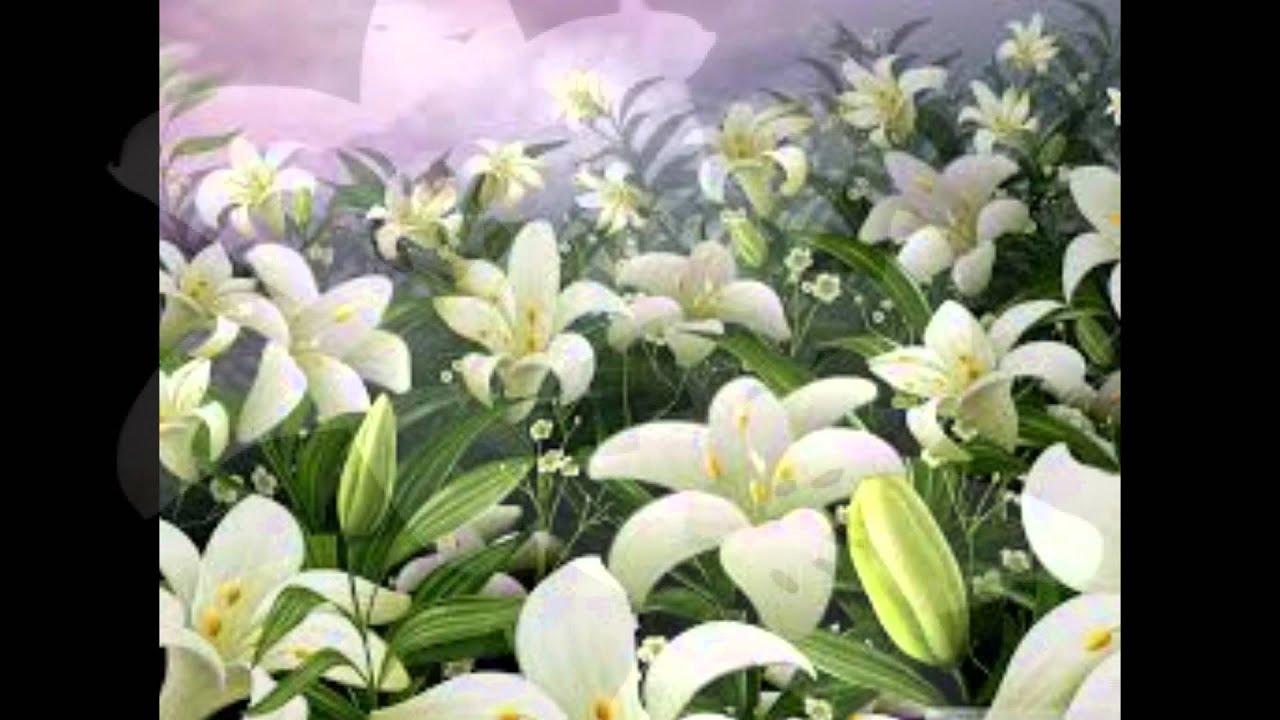 Las flores de lirio 2 youtube for Azucena plantas jardin