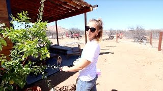 PREPPING TO PLANT SOME AWESOME FRUIT TREES WITH GREYWATER
