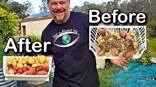 How to Grow Potatoes From Potatoes | That Have Gone Past Use By