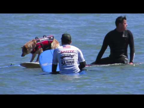 Surfing Dog Shoots The Curl as The Mermen play 'Jack The Ripper' and 'Hammerhead'