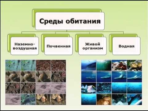 Книга Биология. Многообразие покрытосеменных растений. - Пасечник .