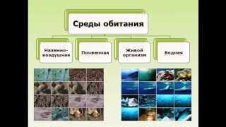 Среда обитания организмов