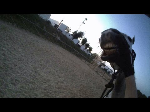 Passion Equitation en vacances #1 - Jour 3 - Lujan mange du sable...