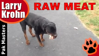 Bruno The Rottweiler Eating Raw Meat And Bones