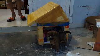 Làm chuồng chó C๐n bằng Thùng Xốp - Cuộc sống Đà Lạt