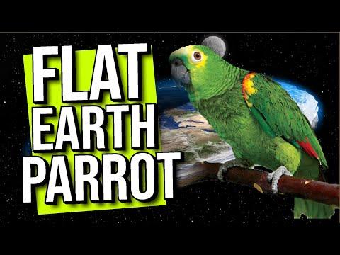 FLAT EARTH PARROT thumbnail