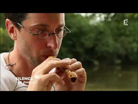 Silence ça pousse : musique verte et flutins des bois