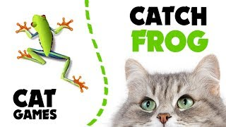 CAT GAMES ★ CATCH FROG on screen ★