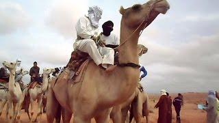 أنا الشاهد: سباق الإبل المعروف بسباق المهاري في الجزائر