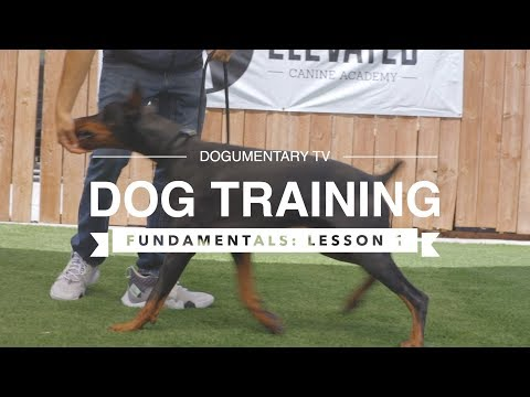 DOG TRAINING FUNDAMENTALS: LESSON 3 LURING