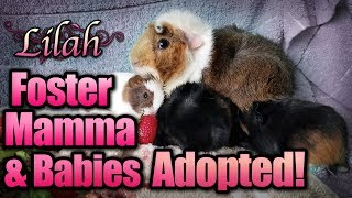 Foster Mamma & Babies Adopted!
