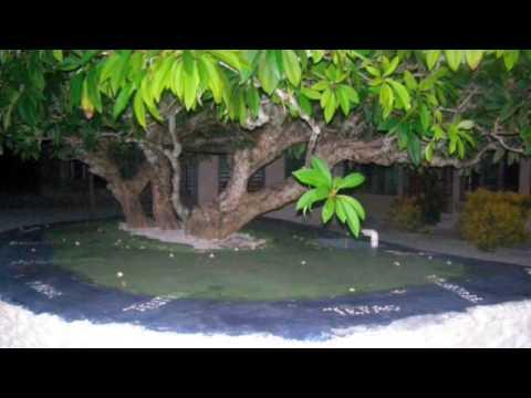 Tuvalu song- Palini & Kale **Tolai**