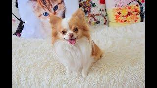 Как Научить Собаку Команде Ждать ll DogSchool