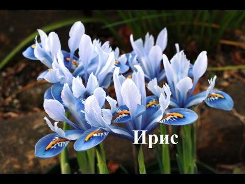 Искусственные декоративные цветы и растения, композиции в