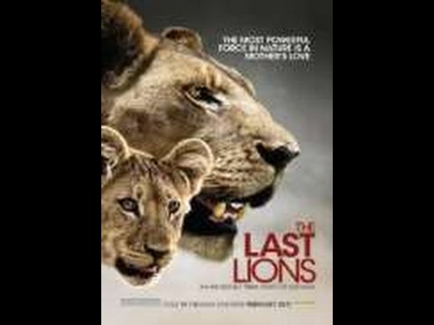 Watch The Last Lions   Watch Movies Online Free