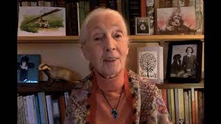 National Badger Day Dr Jane Goodall