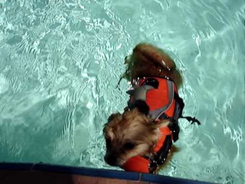 Dolce's swimming class with a life jacket - Florida
