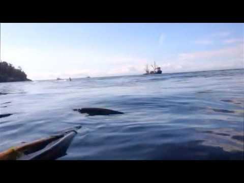 San Juan Island Kayaking with Orcas