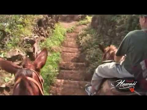 Molokai Mule Ride, to Kalaupapa Colony